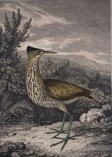 Antique Print, Engraving, Bittern Bird, Howitt, Old Picture