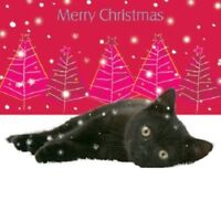 Snowflakes Black Kitten Cat  lying in snow 10 pack small Square Christmas cards