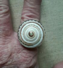 Big Spiral Shell Ring 925 Silver size 7 - 9 + size adjustable