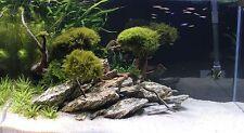 3kg Natural Wood Stone for an Aquarium Aquascaping IWAGUMI Style