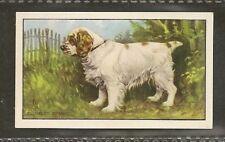 Rare 1936 Dog Art Gallaher A Series Full Body Cigarette Card Clumber Spaniel