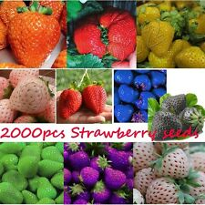 2000pcs Strawberry Seeds Delicious Sweet Giant Berry Fruit Everbearing Plant Sow