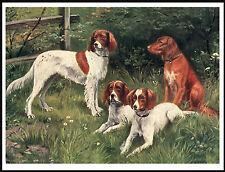 Irish Red And White Setter Group Of Dogs Lovely Vintage Style Dog Print Poster