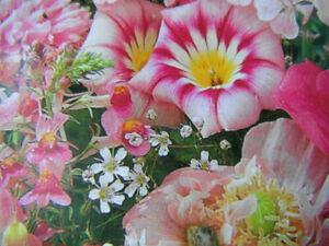 Sea of pink flower 30 seeds