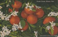 US POSTCARD LINEN FLORIDA ORANGE BLOSSOM TIME-1951 *Free Shipping*