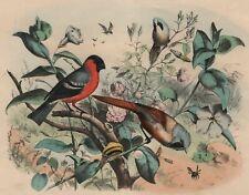 Décoration Bouvreuil et Mésange moustache Oiseau Lithographie originale XIXe