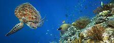 """Sea Turtle Aquarium Background 24"""" x 48"""""""