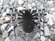 Large Spider Fake Halloween Prop Black White Fuzzy Tarantula Flocked Frightening