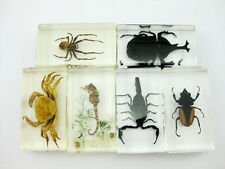 6 Cool Mix Insect Specimen Collection Set in Clear Lucite Block