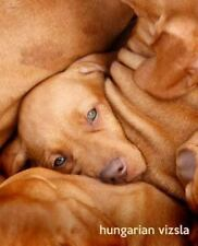So Cute Puppies: Hungarian Vizsla : A Gift Journal for People Who Love Dogs:.