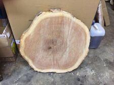 Holzscheibe geschliffen Baumscheibe geölt ca.50 x 9-10 cm