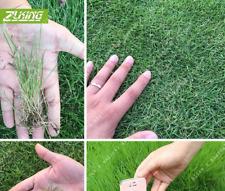 1000 Pcs Seeds Bonsai Plants Home Garden Carpet Ornamental Grass Free Shipping N