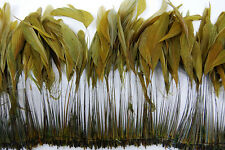 "30 Pcs BURNT COQUE FRINGE - OLIVE 8-12"" Tall Feathers Pad"