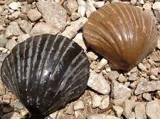 Sea Shells, mold, plastic mold, concrete mold, cement, plaster, mould