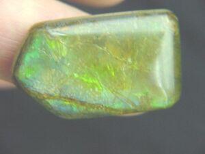 BUTW AA ammolite ammonite freeform cabochon 1443A