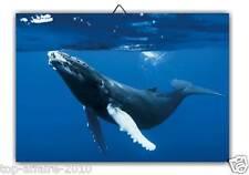 1 Cadre / Tableau Décoratif  BALEINE   - G67   ( animaux marins )