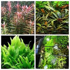 Plant Variety Pack 8 PLANTS Java Fern Amazon Sword Jungle Val Aquarium Plants ✅
