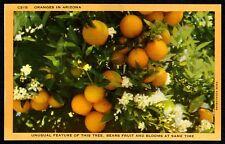 CLOSEUP VIEW CLUSTER of ARIZONA ORANGES/BLOSSOMS~ORIGINAL 1940s UNUSED POSTCARD
