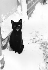 Black Cat in the Snow: Waiting to be let in Exclusive 1960s Photo Christmas Card