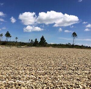 SUMATRA MANDHELING G1 RFA Green/Raw 100% Arabica Coffee Beans For Home Roasting
