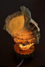 GIANT TRITON SEA SHELL NIGHT TABLE LAMP #7476