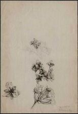 Dessin du XXe siècle et contemporains en fleur, arbre
