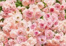 Papel pintado y accesorios Komar color principal rosa