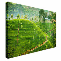 Green Tea Fields In Sri Lanka Canvas Wall Art Picture Print