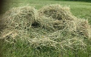 Top Quality Fresh Meadow Hay 1KG, suitable for rabbits and guinea pigs