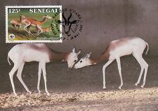 (70472) Maxicard - Senegal - Dama Gazelle - 1986