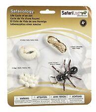 S663916 Safari Wissenschaft - Lebenszyklus einer Ameise (Set)