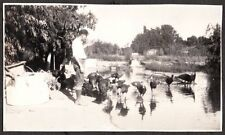 VINTAGE 1929-35 TURKEY FARM INVERNESS DRY CREEK HEALDSBURG CALIFORNIA OLD PHOTO