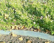 10 Meter Rasenkanten Metall 18 cm Beeteinfassung Rasenkante Rasen bord verzinkt
