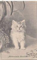 B81371 mademoiselle franchette   cat chat front/back image