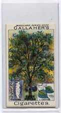 (Ja9685-100)  GALLAHER,WOODLAND TREES,BLACK POPLAR TREE,1912#50