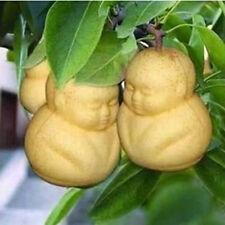 20pcs Rare Baby Ginseng Fruit Seeds pear tree seeds sapodilla Solanum Home Decor