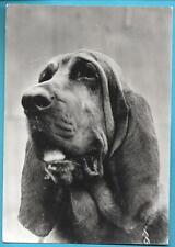 Publicité Pharma GENOLINE 1963 : CHIEN SAINT-HUBERT + Carte postale N° 56 C