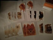 16 Pomeranian dog note cards and envelopes artlist new stationary