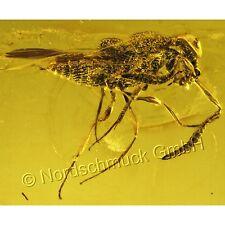 Bernstein Inkluse Inklusen Einschluss Insekt, Taillenwespe (Apocrita) IN178