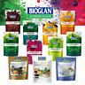 BIOGLAN SUPERFOODS SUPERGREENS PLUS PROTEIN BERRY BURST SMOTHIE POWDER INULIN