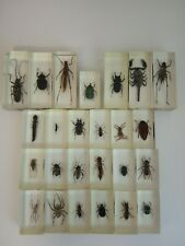 Insects collection Bugs.Real Bugs Stick Insect in Resin