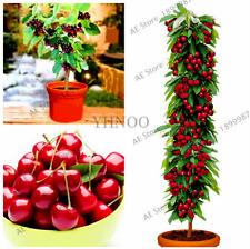 20 Pcs Seeds Mini Cherry Tree Plants Bonsai Dwarf Fruit Garden Free Shipping New