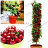 20 PCS Seeds Mini Cherry Tree Plants Bonsai Dwarf Fruit Garden Free Shipping New
