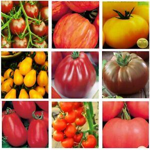Tomatensamen 31 Sorten Cocktail-Busch-Fleisch-Cherry-Kirsch-Stabtomate Samen