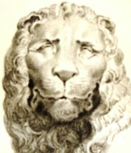 By Zanetti  Greek Statues  LION OF MARBLE  Rare Antique Copper Engraving  1743