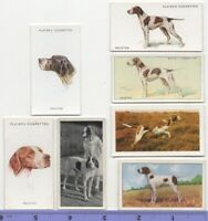 Pointer Dog Pet Canine 7 Different Vintage Ad Trade Cards #4