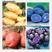 Potato Seeds Rare China High-nutrition Potatoes Fruit And Vegetable Seeds 200pcs