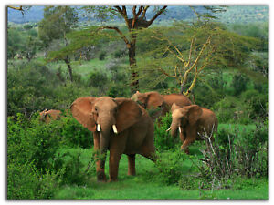 African Elephant Canvas Photo Prints Elephant Wall Decor Framed Wall Art