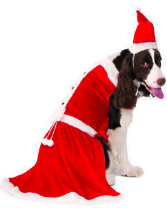 Mrs Santa Claus Big Dog Pet Christmas Holiday Costume