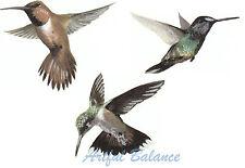 Ceramic Decals Hummingbird Humming Bird Animal 3 Designs